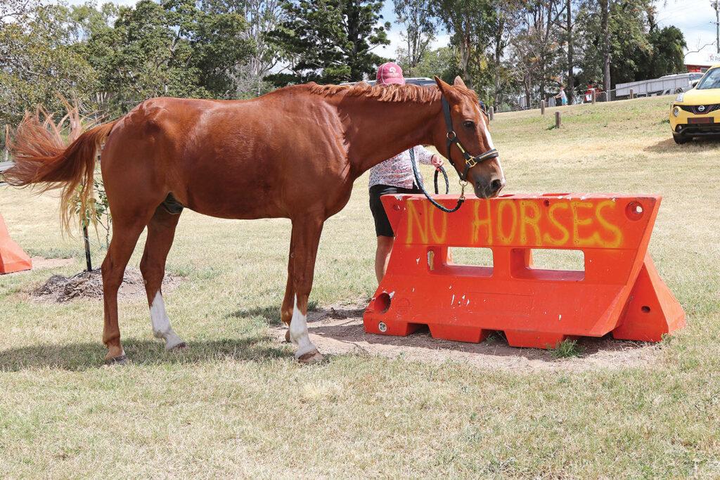 'Sunny' reading the 'No Horses' sign!