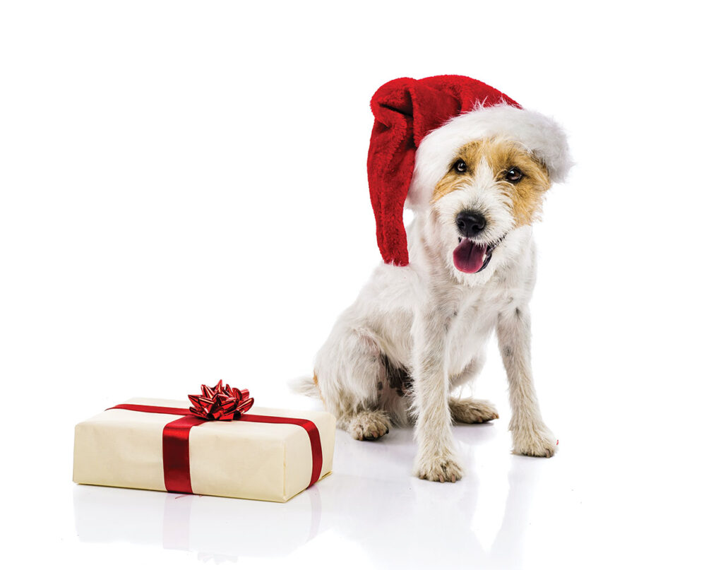 Dog sitting in santa hat next to gift