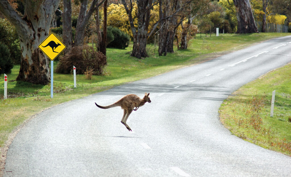 Watch For Wildlife On Our Roads During Winter